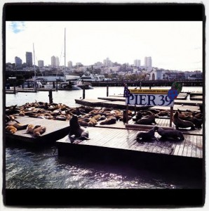 Pier 39 2