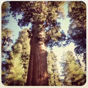 sequoia park 2